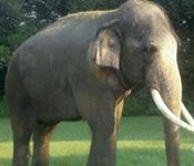 http://allaboutelephants.com/images/elephanthome.jpg