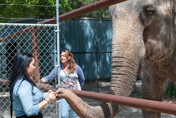 all about elephants, two tails ranch, 2 tails ranch, gainesville, williston, florida, fl, archer, elephant ranch in gainesville, donate to elephants, patricia zerbini, asian and african elephant ranch, private elephant ranch tours, educational elephant tours