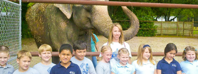 Two Tails Ranch: All About Elephants